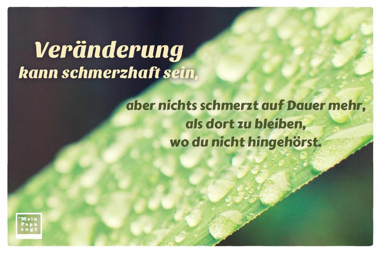 Wassertropfen auf Palmenblatt mit dem Spruch: Veränderung kann schmerzhaft sein, aber nichts schmerzt auf Dauer mehr, als dort zu bleiben, wo du nicht hingehörst.