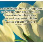 Weiße Tulpen mit dem Coelho Zitat: Wenn zwei Menschen sich begegnen, die füreinander bestimmt sind, dann ist keine Eile geboten, weil das Unausweichliche sowieso geschehen wird. Paulo Coelho