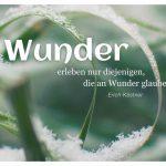 Gräser mit Schneekristallen / Schnee und dem Kästner Zitat: Wunder erleben nur diejenigen, die an Wunder glauben. Erich Kästner
