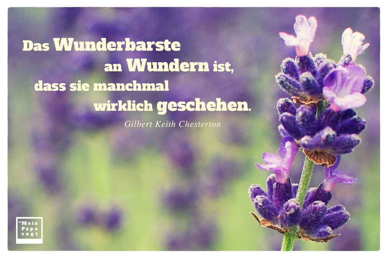lila Blüten mir dem Chesterton Zitat: Das Wunderbarste an Wundern ist, dass sie manchmal wirklich geschehen. Gilbert Keith Chesterton