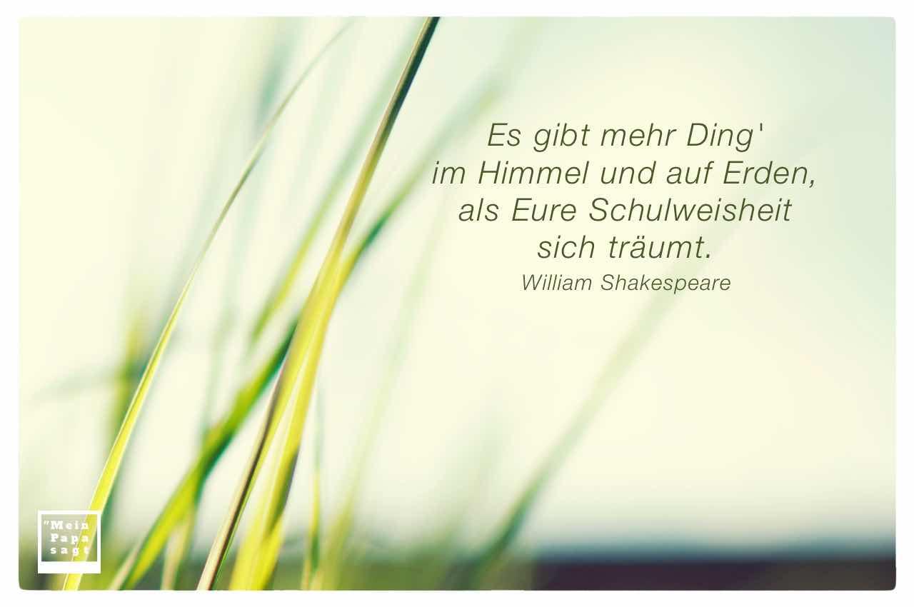 Gräser mit dem Shakespeare Zitat: Es gibt mehr Ding' im Himmel und auf Erden, als Eure Schulweisheit sich träumt. William Shakespeare