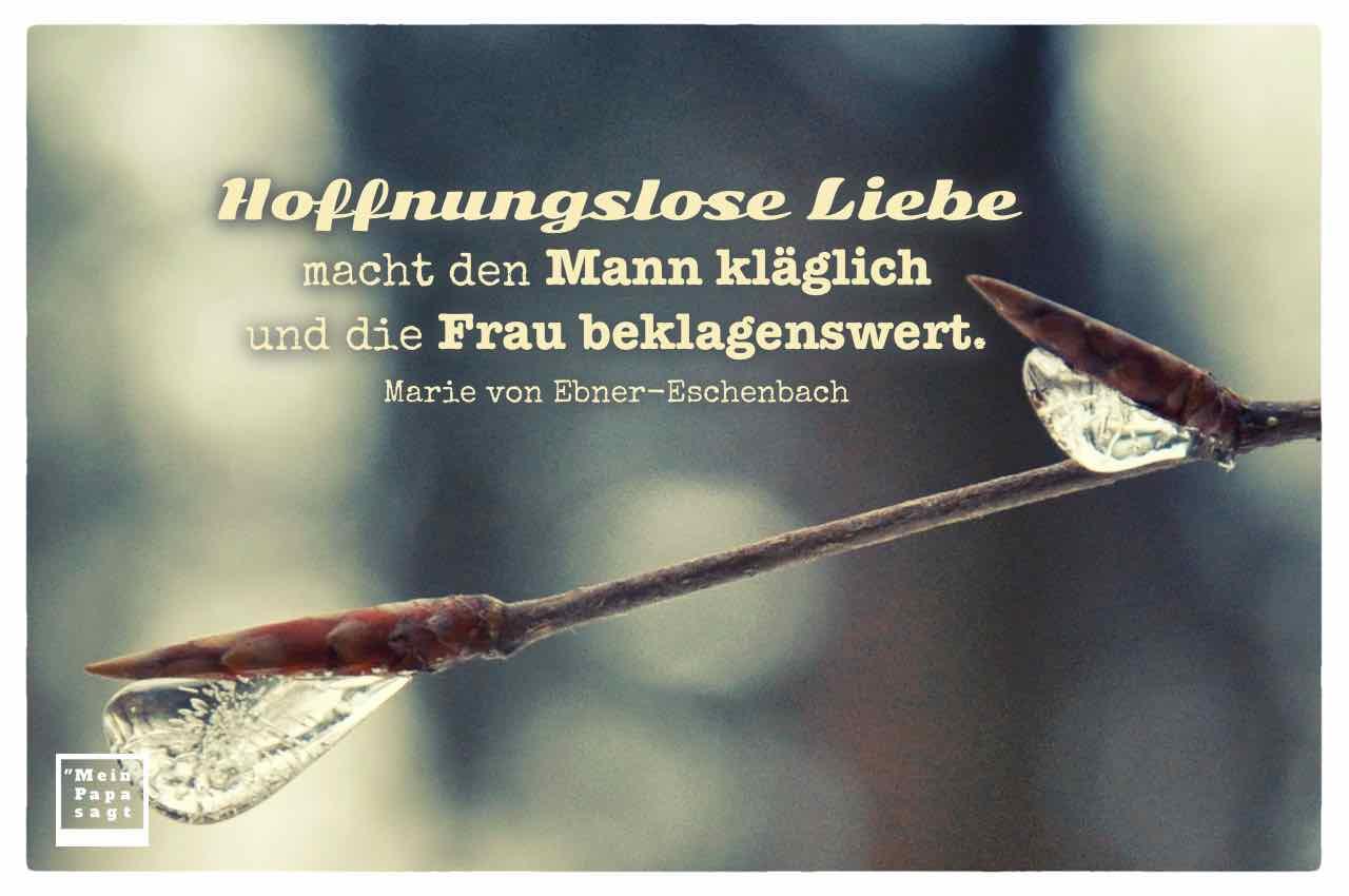 Eiszapfen an jungen Trieben mit dem Ebner-Eschenbach Zitat: Hoffnungslose Liebe macht den Mann kläglich und die Frau beklagenswert. Marie von Ebner-Eschenbach