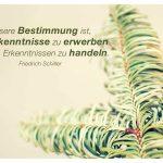 Tannenzweig mit dem Schiller Zitat: Unsere Bestimmung ist, uns Erkenntnisse zu erwerben und aus Erkenntnissen zu handeln. Friedrich Schiller