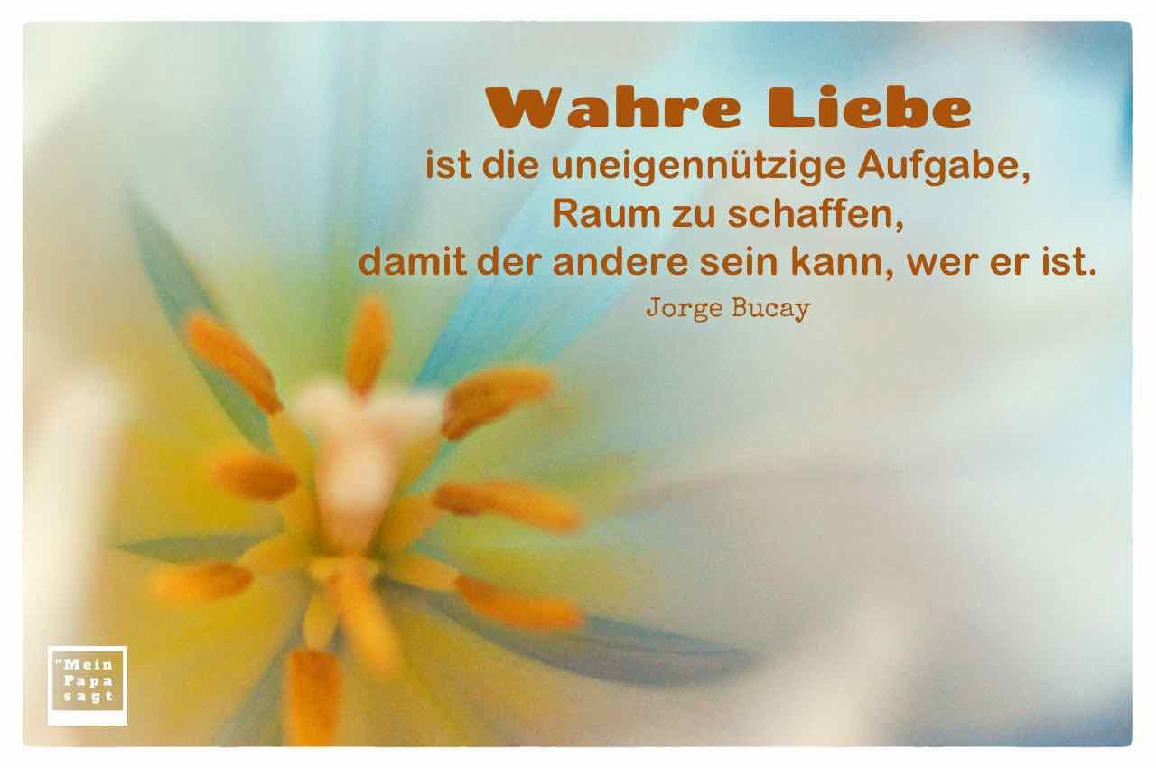Tulpen Blütenstempel mit dem Bucay Zitat: Wahre Liebe ist die uneigennützige Aufgabe, Raum zu schaffen, damit der andere sein kann, wer er ist. Jorge Bucay