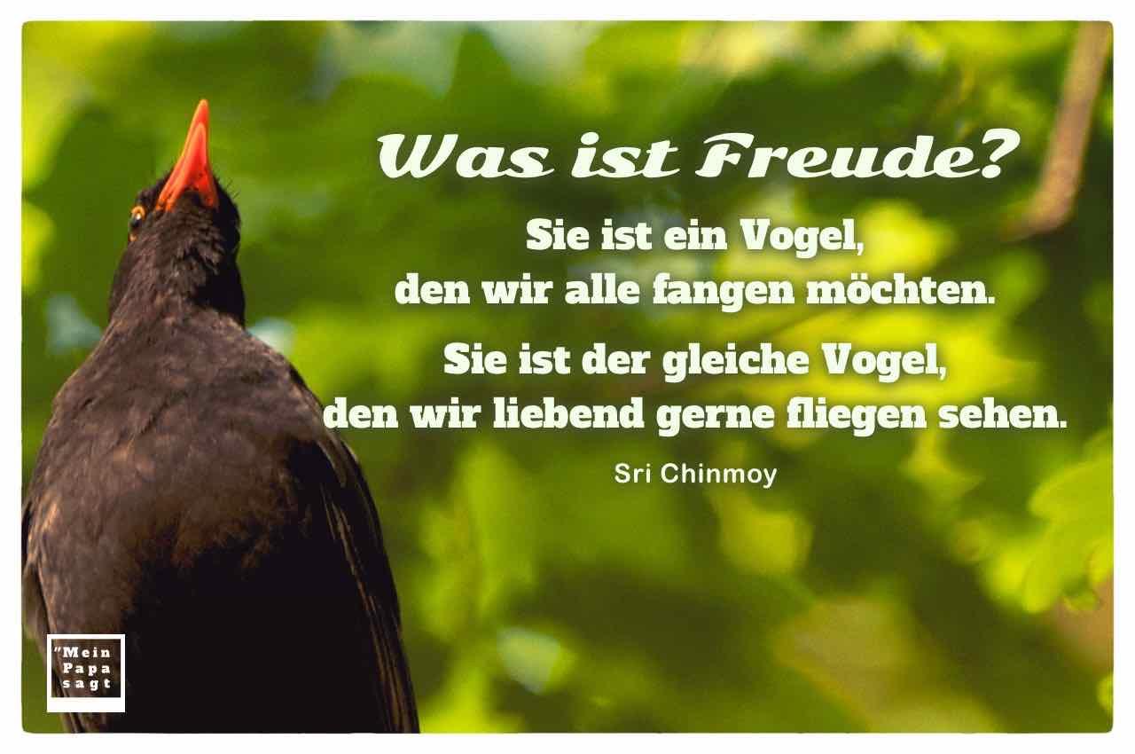 Amsel mit dem Chinmoy Zitat: Was ist Freude? Sie ist ein Vogel, den wir alle fangen möchten. Sie ist der gleiche Vogel, den wir liebend gerne fliegen sehen. Sri Chinmoy
