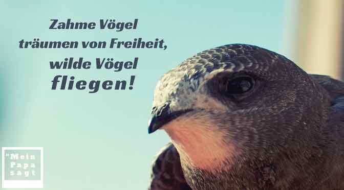 Zahme Vögel träumen von Freiheit, wilde Vögel fliegen!