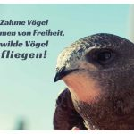 Mauersegler mit dem Spruch: Zahme Vögel träumen von Freiheit, wilde Vögel fliegen!