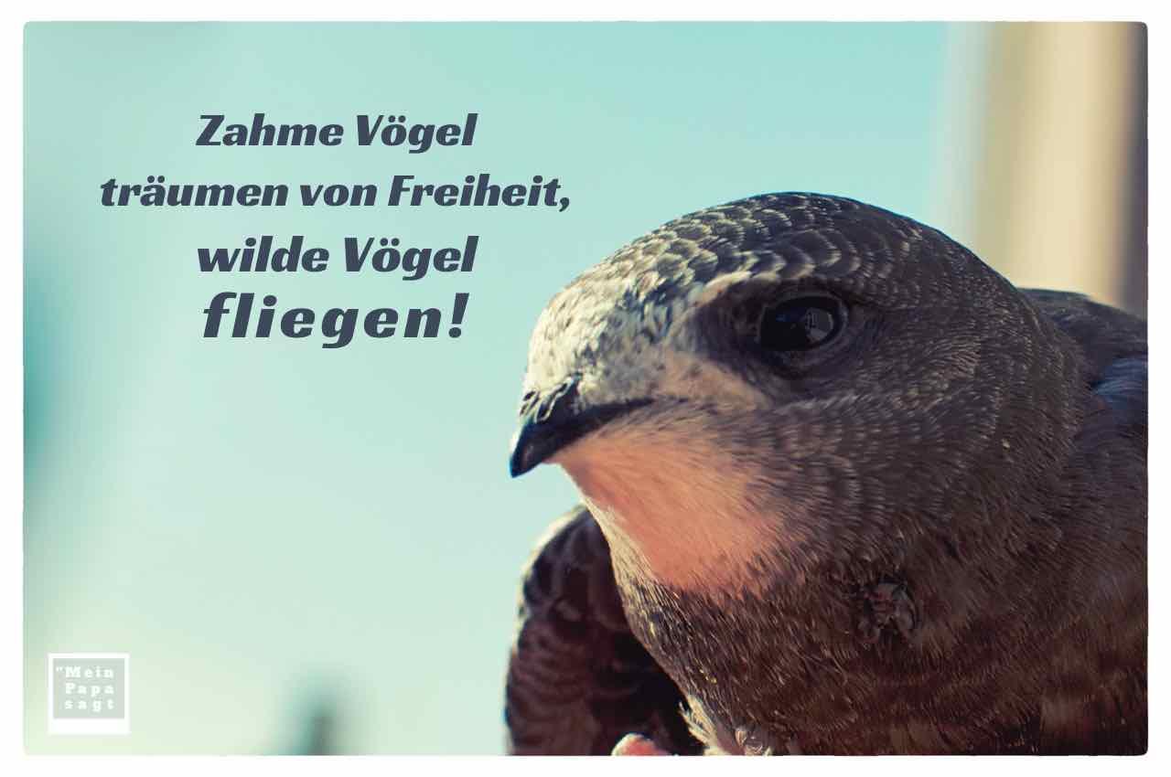 Mein Papa Sagt Zahme Vögel Träumen Von Freiheit Wilde