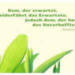 Wicken-Blätter mit dem Heraklit Zitat: Dem, der erwartet, widerfährt das Erwartete, jedoch dem, der hofft, das Unverhoffte. Heraklit