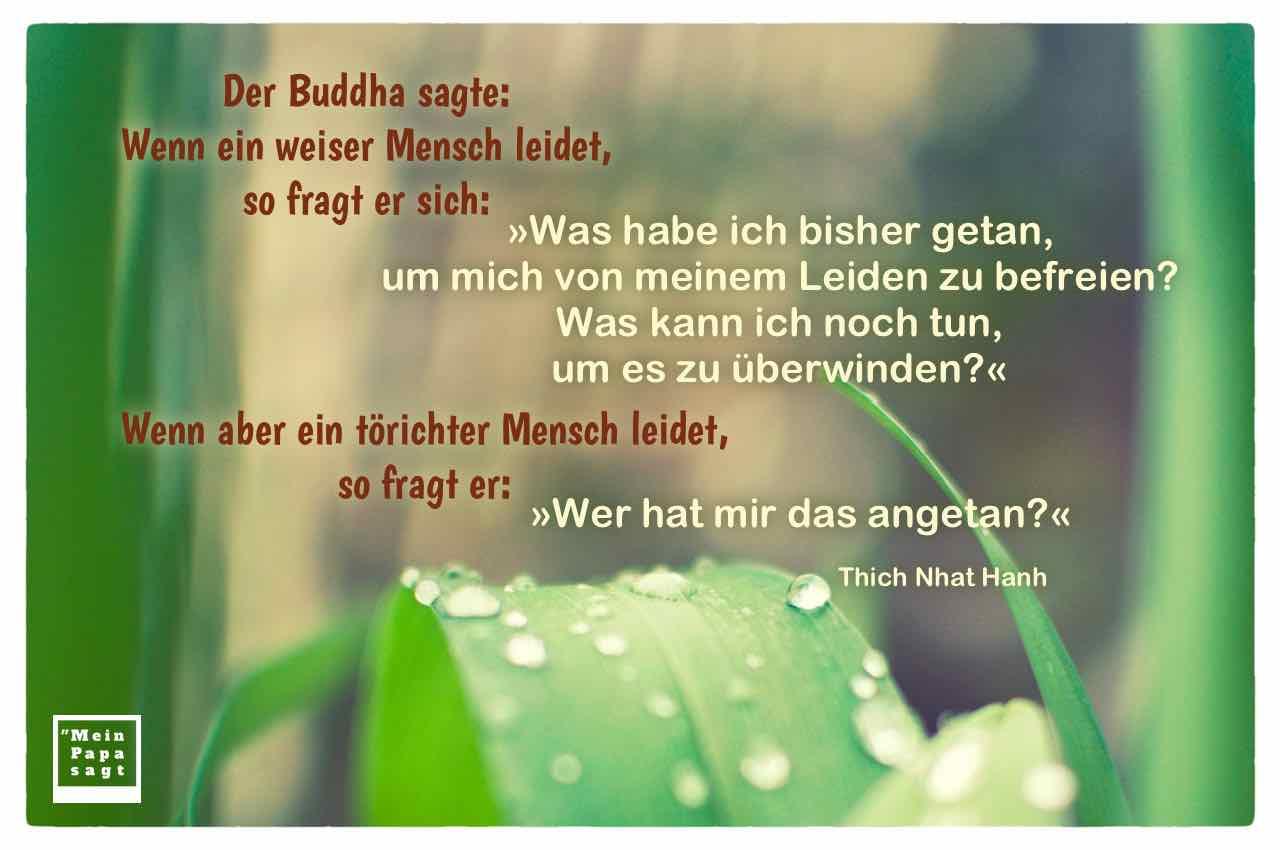 Regentropfen auf Palmenblatt mit dem Thich Nhat Hanh Zitat: Der Buddha sagte: Wenn ein weiser Mensch leidet, so fragt er sich: »Was habe ich bisher getan, um mich von meinem Leiden zu befreien? Was kann ich noch tun, um es zu überwinden?« Wenn aber ein törichter Mensch leidet, so fragt er: »Wer hat mir das angetan?« Thich Nhat Hanh