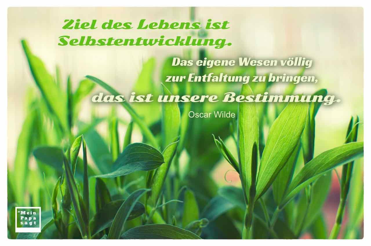 Wicken mit dem Wilde Zitat: Ziel des Lebens ist Selbstentwicklung. Das eigene Wesen völlig zur Entfaltung zu bringen, das ist unsere Bestimmung. Oscar Wilde