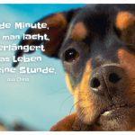 junger Hund mit dem Sprichwort: Jede Minute, die man lacht, verlängert das Leben um eine Stunde. aus China