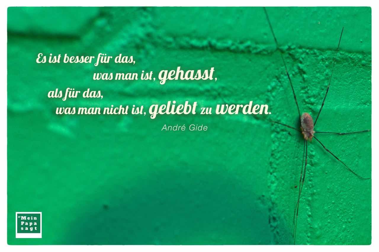 Spinne mit dem Gide Zitat: Es ist besser für das, was man ist, gehasst, als für das, was man nicht ist, geliebt zu werden. André Gide