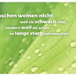 Fensterblatt mit Regentropfen und dem Spruch: Menschen weinen nicht weil sie schwach sind, sondern weil sie schon zu lange stark sein mussten.