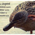 kratzende Ente mit dem Spruch: Wer in der Jugend keinen Blödsinn macht, hat im Alter nichts, worüber er schmunzeln kann.