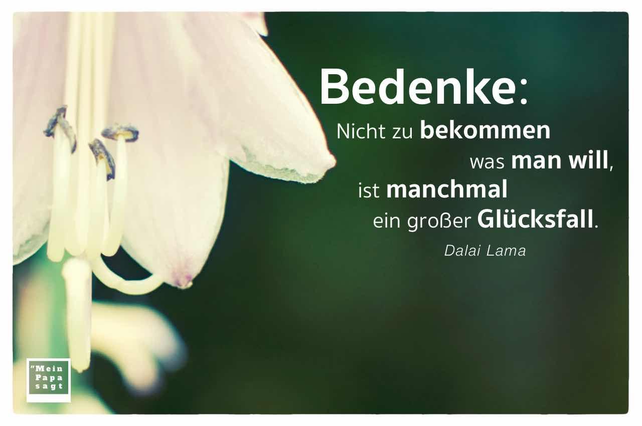 hängender Blütenkelch mit dem Dalai Lama Zitat: Bedenke: Nicht zu bekommen was man will, ist manchmal ein großer Glücksfall. Dalai Lama