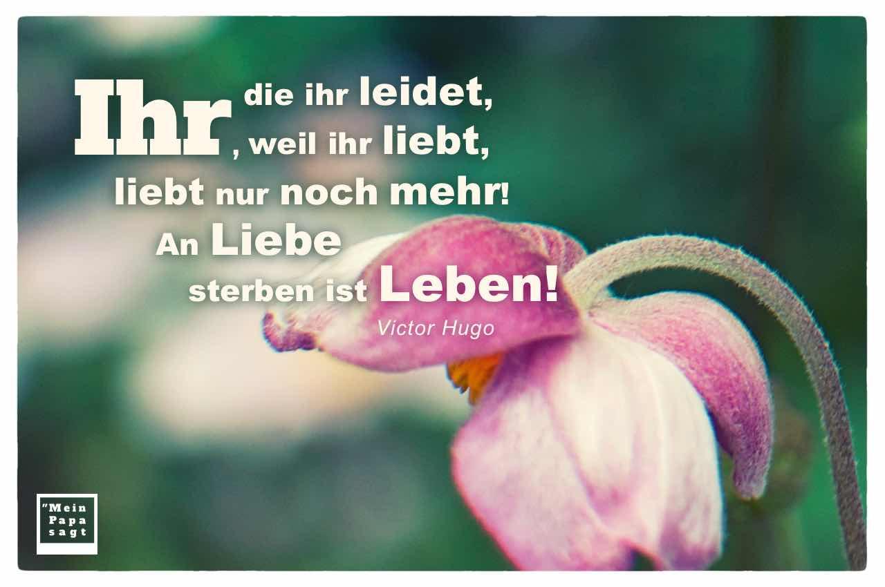 hängender Blütenkelch mit dem Hugo Zitat: Ihr, die ihr leidet, weil ihr liebt, liebt nur noch mehr! An Liebe sterben ist Leben! Victor Hugo