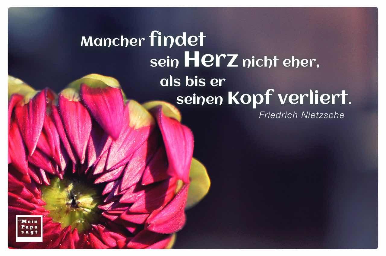 Blütenkopf mit dem Nietzsche Zitat: Mancher findet sein Herz nicht eher, als bis er seinen Kopf verliert. Friedrich Nietzsche