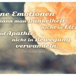 Rose mit Wassertropfen und dem Jung Zitat: Ohne Emotionen kann man Dunkelheit nicht in Licht und Apathie nicht in Bewegung verwandeln. Carl Gustav Jung