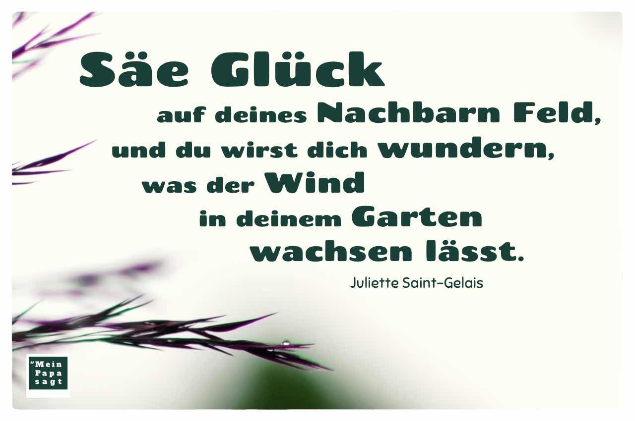Gräser mit Regentropfen und dem Saint-Gelais Zitat: Säe Glück auf deines Nachbarn Feld, und du wirst dich wundern, was der Wind in deinem Garten wachsen lässt. Juliette Saint-Gelais