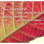 Laubblatt mit dem Aurel Zitat: Was du erhältst, nimm ohne Stolz an. Was du verlierst, gib ohne Trauer auf. Marc Aurel