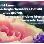 Rosenblüte mit dem Bonhoeffer Zitat: Es gibt kaum ein beglückenderes Gefühl, als zu spüren, dass man für andere Menschen etwas sein kann. Dietrich Bonhoeffer
