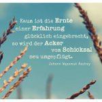 Acker-Pflanzen mit dem Nestroy Zitat: Kaum ist die Ernte einer Erfahrung glücklich eingebracht, so wird der Acker vom Schicksal neu umgepflügt. Johann Nepomuk Nestroy