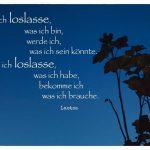 Pflanze vor Himmel zur blauen Stunde mit dem Laotse Zitat: Wenn ich loslasse, was ich bin, werde ich, was ich sein könnte. Wenn ich loslasse, was ich habe, bekomme ich was ich brauche. Laotse