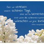 Blüten vor blauem Himmel mit dem Schopenhauer Zitat: Aber wir verleben unsere schönen Tage, ohne sie zu bemerken: erst wenn die schlimmen kommen, wünschen wir jene zurück. Arthur Schopenhauer