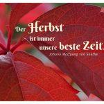 Herbstblatt mit dem Goethe Zitat: Der Herbst ist immer unsere beste Zeit. Johann Wolfgang von Goethe