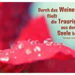 Tropfen auf Blume mit dem Zitat: Durch das Weinen fließt die Traurigkeit aus der Seele heraus. Thomas von Aquin