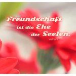 Blumen unscharf mit dem Voltaire Zitat: Freundschaft ist die Ehe der Seelen. Voltaire