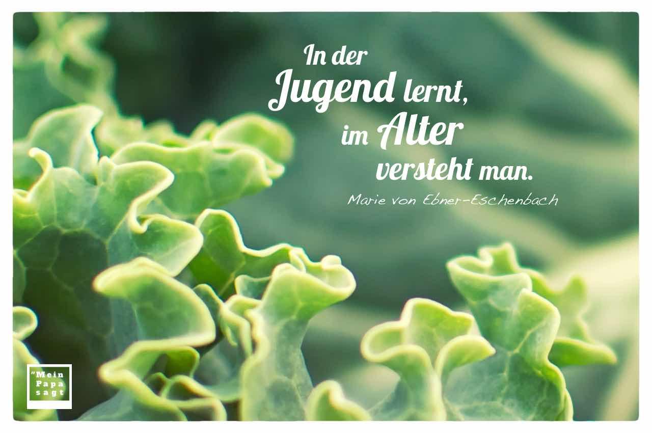 Pflanze mit dem Zitat: In der Jugend lernt, im Alter versteht man. Marie von Ebner-Eschenbach