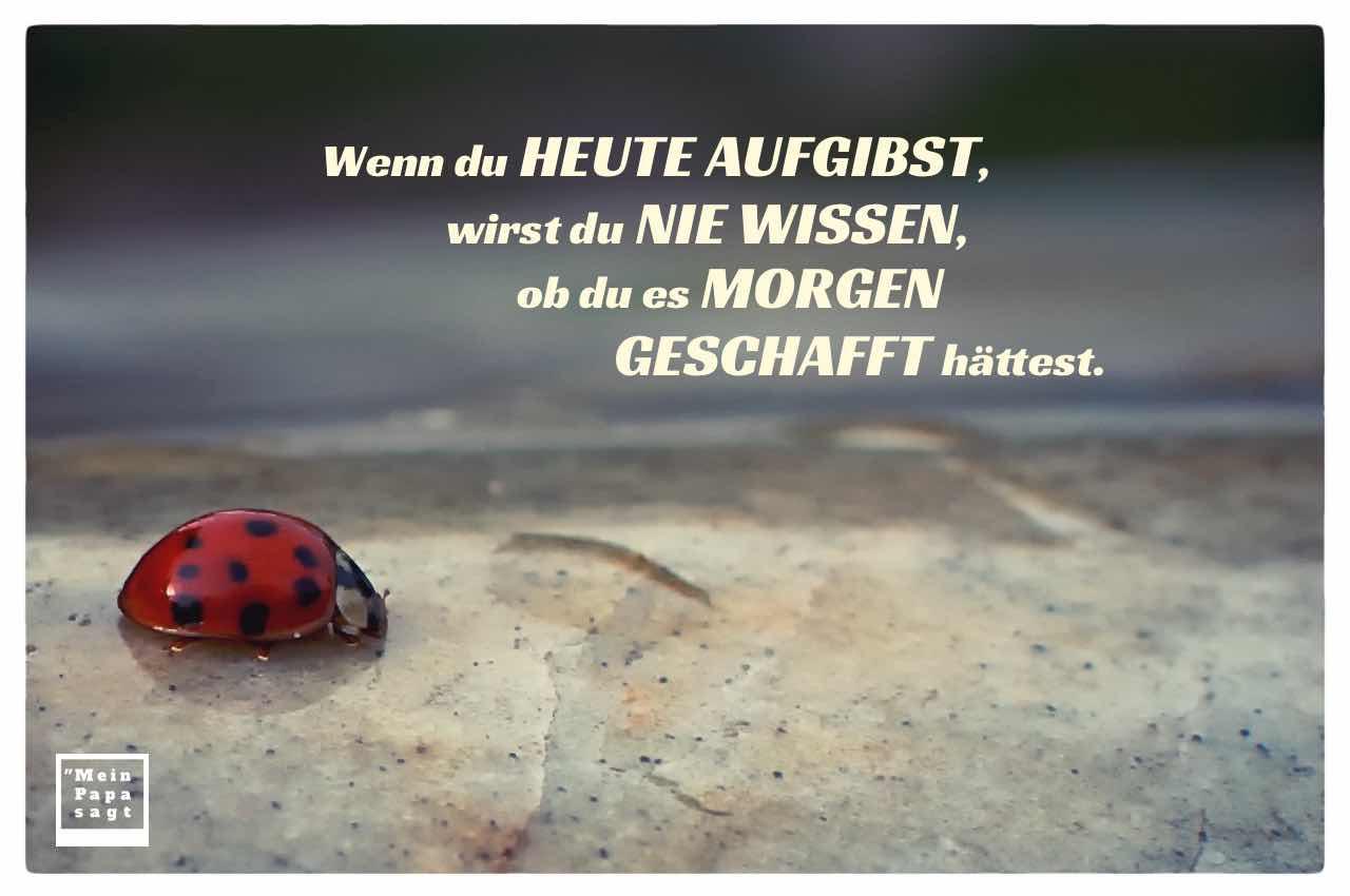 Marienkäfer mit dem Spruch: Wenn du heute aufgibst, wirst du nie wissen, ob du es morgen geschafft hättest.