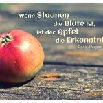 Apfel auf Holztisch mit dem Herger Zitat: Wenn Staunen die Blüte ist, ist der Apfel die Erkenntnis. Denis Herger