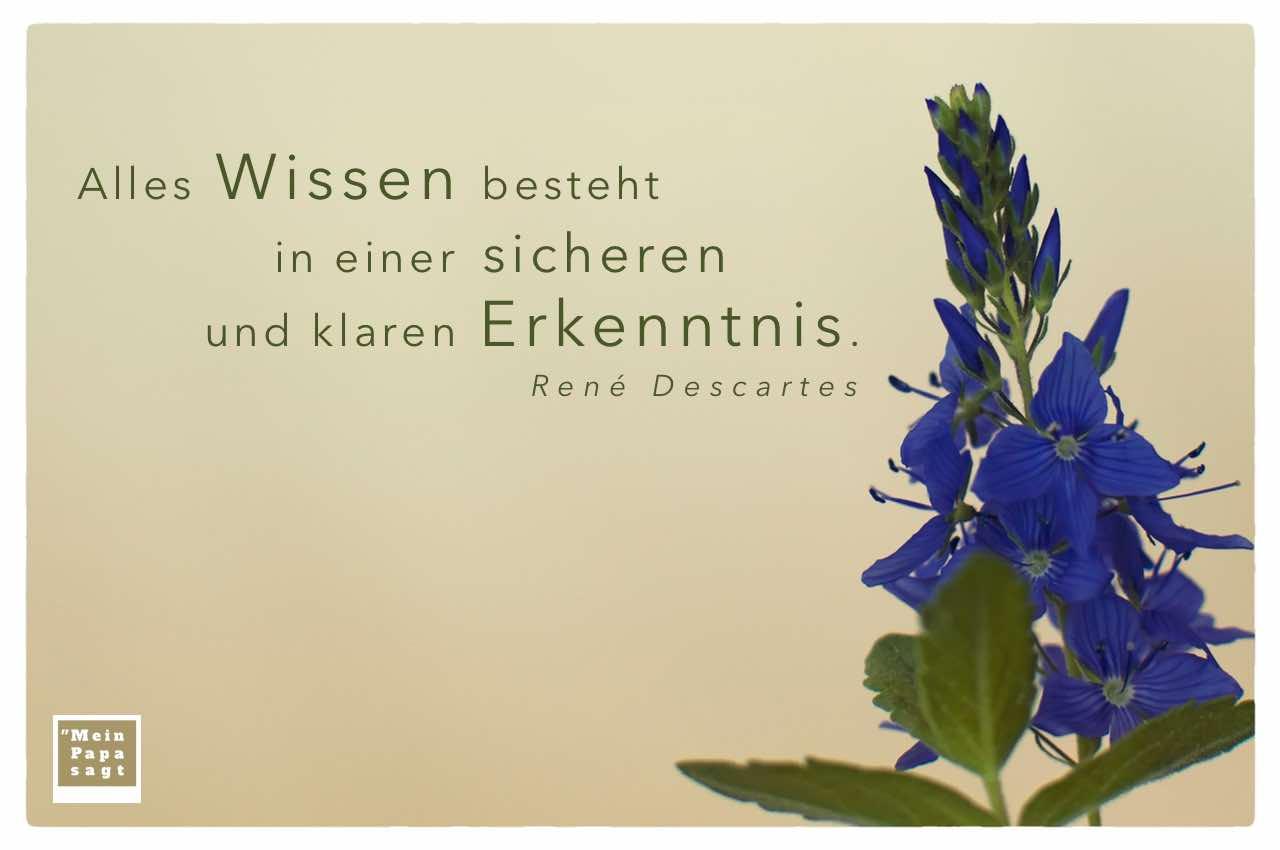 Blüten mit dem Descartes Zitat: Alles Wissen besteht in einer sicheren und klaren Erkenntnis. René Descartes