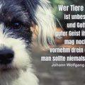 Wer Tiere quält, ist unbeseelt und Gottes guter Geist ihm fehlt, mag noch so vornehm drein er schaun, man sollte niemals ihm vertraun...