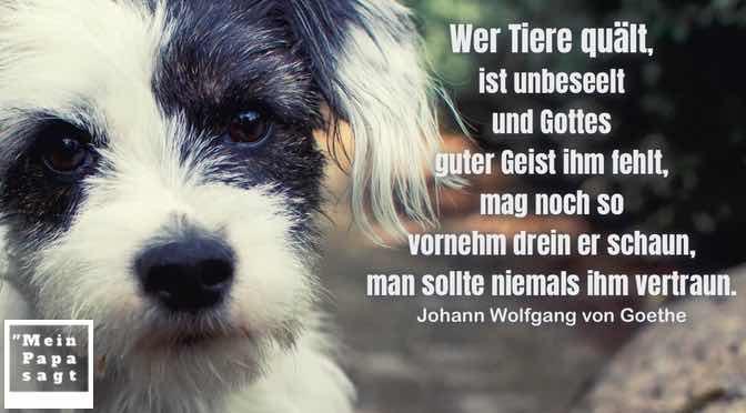Wer Tiere quält, ist unbeseelt und Gottes guter Geist ihm fehlt, mag noch so vornehm drein er schaun, man sollte niemals ihm vertraun…