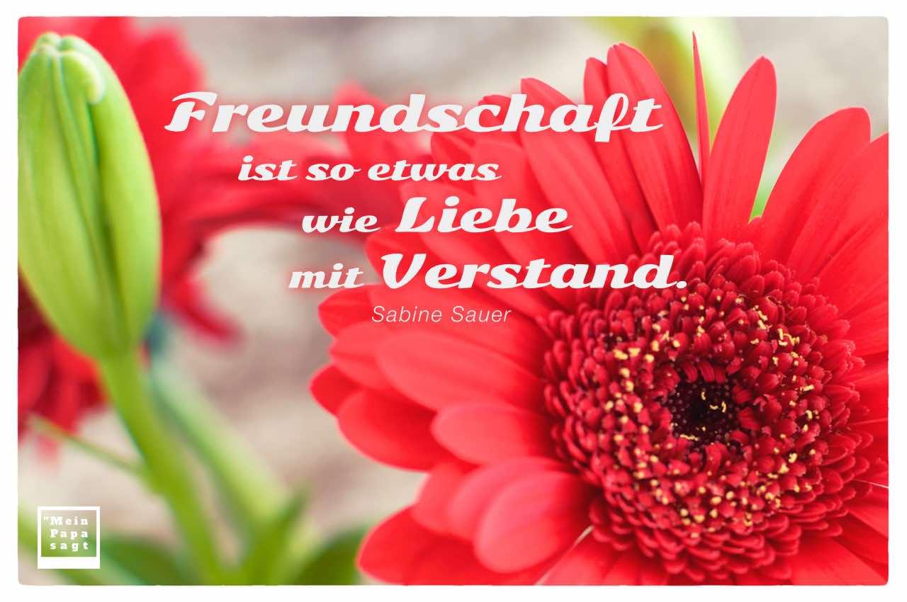 Gerbera mit dem Zitate-Bild: Freundschaft ist so etwas wie Liebe mit Verstand. Sabine Sauer