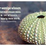 Steinseeigel mit dem Heisenberg Zitate-Bild: Nur wenige wissen, wie viel man wissen muss, um zu wissen, wie wenig man weiß. Werner Heisenberg
