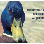 Ente mit dem Adenauer Zitat: Was interessiert mich mein Geschwätz von gestern. Konrad Adenauer