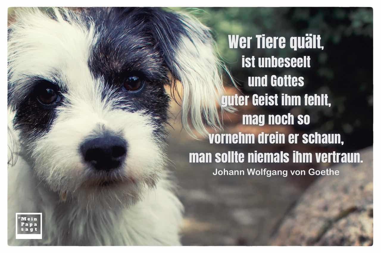 Hund-Mischling mit dem Goethe Zitate-Bild: Wer Tiere quält, ist unbeseelt und Gottes guter Geist ihm fehlt, mag noch so vornehm drein er schaun, man sollte niemals ihm vertraun. Johann Wolfgang von Goethe