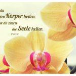 Orchideen mit dem Platon Zitat: Willst du den Körper heilen, musst du zuerst die Seele heilen. Platon
