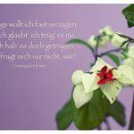 Blüte mit dem Heine Gedicht Bild: Anfangs wollt ich fast verzagen, Und ich glaubt' ich trüg' es nie, Und ich hab' es doch getragen, - Aber fragt mich nur nicht, wie? Heinrich Heine
