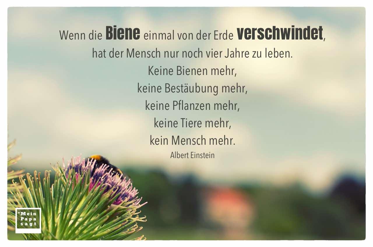 Hummel vor blauem Himmel mit dem Einstein Zitate Bild: Wenn die Biene einmal von der Erde verschwindet, hat der Mensch nur noch vier Jahre zu leben. Keine Bienen mehr, keine Bestäubung mehr, keine Pflanzen mehr, keine Tiere mehr, kein Mensch mehr. Albert Einstein
