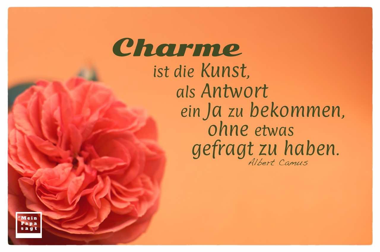 Rote Rose mit Camus Zitate Bildern: Charme ist die Kunst, als Antwort ein Ja zu bekommen, ohne etwas gefragt zu haben. Albert Camus