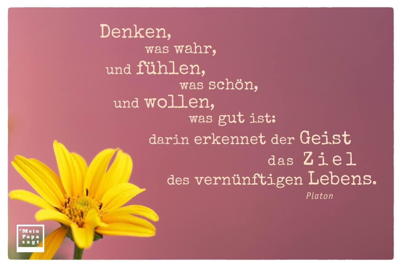 Blüte mit Platon Zitate Bildern: Denken, was wahr, und fühlen, was schön, und wollen, was gut ist: darin erkennet der Geist das Ziel des vernünftigen Lebens. Platon