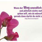 Blüte mit Hammarskjöld Bilder Zitat: Wenn der Weg unendlich scheint und plötzlich nichts mehr gehen will, wie du wünschst - gerade dann darfst du nicht zaudern. Dag Hammarskjöld