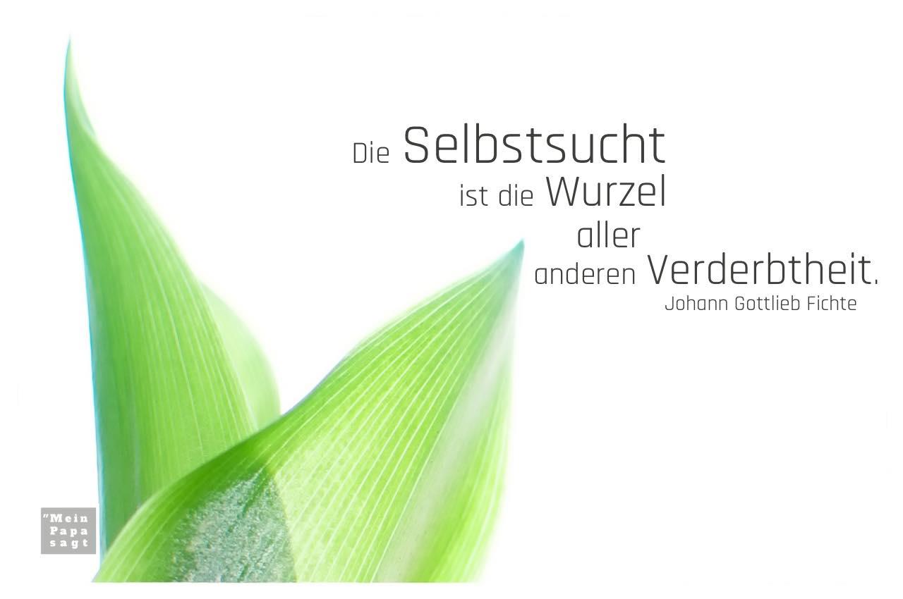 Blätter Maiglöckchen mit Fichte Zitate Bildern: Die Selbstsucht ist die Wurzel aller anderen Verderbtheit. Johann Gottlieb Fichte