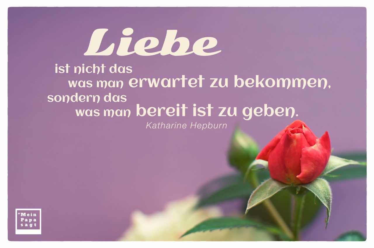Rote Rose mit Hepburn Zitate Bilder: Liebe ist nicht das was man erwartet zu bekommen, sondern das was man bereit ist zu geben. Katharine Hepburn